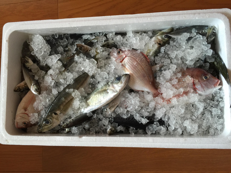 ふるさと納税 奈半利町から「なはり海の幸福袋セット」 驚くべき魚の数です!