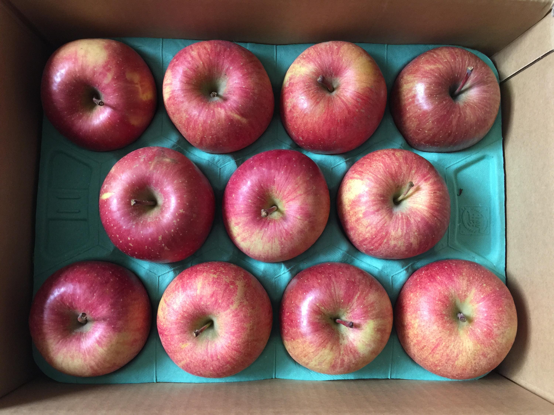 サンデーからの株主優待 青森県産ゴールド農園の葉とらずリンゴ