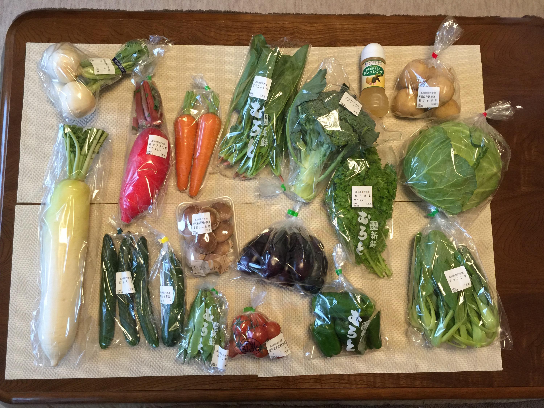 ふるさと納税 室戸市からむろとの味 新鮮野菜セット なんと野菜17種類と大量です!