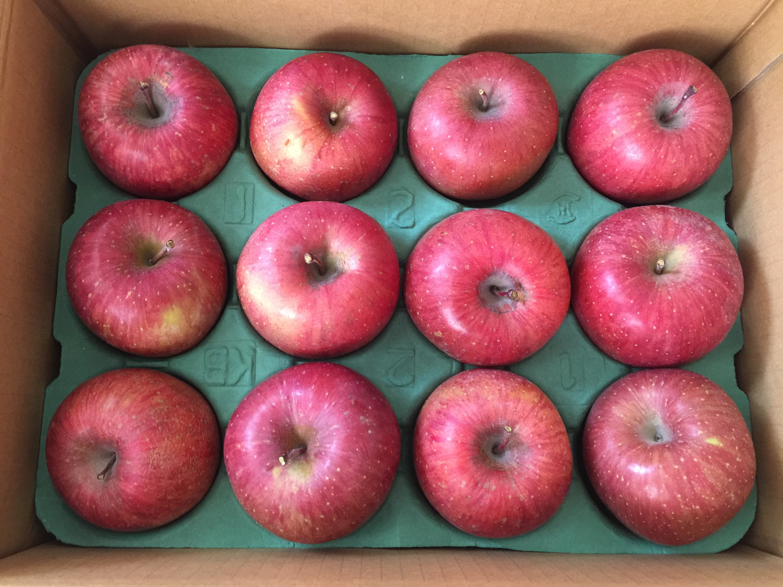 HIOKIからの株主優待 長野県産のりんご「サンふじ」3.5kg