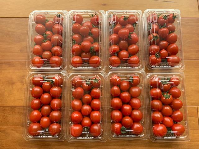 小城市に5,000円のふるさと納税 「頑固おやじ」が作ったミニトマト 8パック!