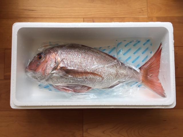 対馬市にふるさと納税 豪華でサービスもすごい 「新鮮活き〆島魚2㎏セット」