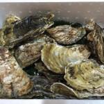 玄海町にふるさと納税 プリプリで粒が大きく、美味しい牡蠣を2キロ